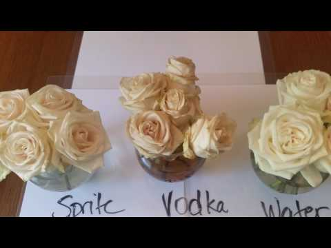 Flowers in Sprite For Mother's Day