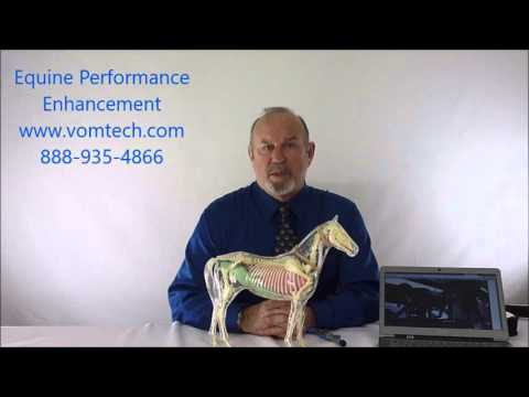 Ways of Equine Performance Enhancement