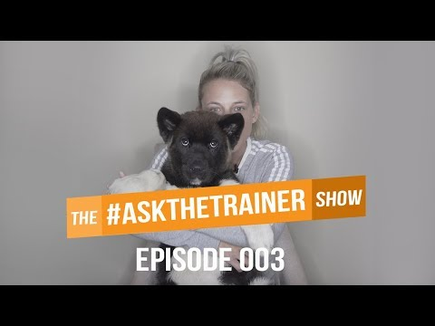 OFF LEASH RECALL, CRATE TRAINING & BARKING AT HOUSEGUESTS | #ASKTHETRAINER 003