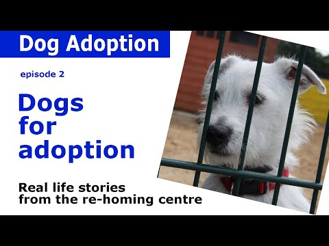 Dogs for adoption | Advice and behind the scenes stories from Dogs Trust | Episode 2
