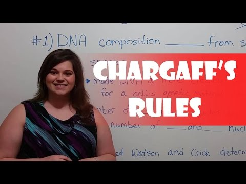 Chargaff's Rules