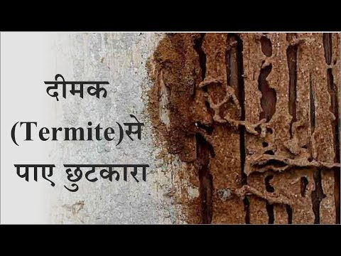दीमक (Termite) से पाए छुटकारा - 7 Way to Get Rid of Termites Permanently - Tuber Tip
