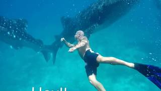 FILIPINA/AMERICAN LIFE SWIMMING WITH THE BIG WHALE SHARK