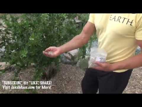 How to properly feed your tropical fruit trees , In Phoenix, AZ