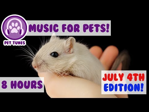 JULY 4TH Playlist! Soothing Music to Calm Pets Scared of Fireworks! Hamsters, Guinea Pigs, Rabbits🎆
