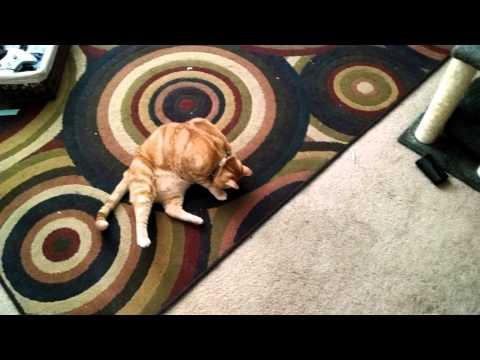 Laser Cat Origins
