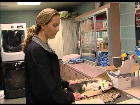 Veterinarian Technician - I Am Pinellas County