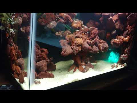 Just some fry tips and a reveal of the new DIY fry tank