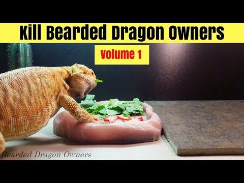 Bearded Dragon (Blaze) // When You Get That Look [4K].