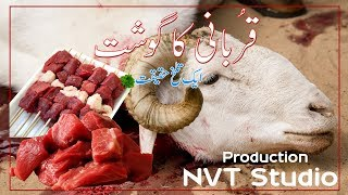 Qurbani KA Ghost | Short Story | Nvt Studio