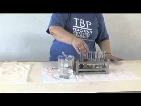 Video 7 - TESTING THE PH OF SOILS.mp4