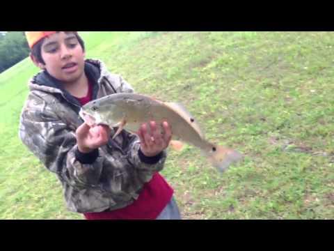Freshwater Redfish