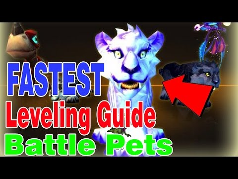 HOW TO QUICKLY LEVEL BATTLE PETS│World of Warcraft Legion