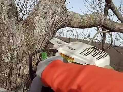Certified Arborist roping a limb over the house