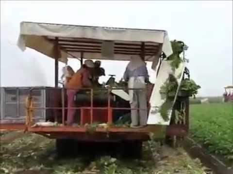 Raddish Harvesting Machine मूली की खुदाई वाली मशीन muli ki fasal ki khudayi wali machine