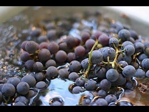 How to make homemade Grape Juice - Summer Drink Recipe   FOOD & TRAVEL TV