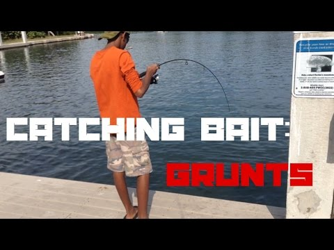 How To Catch Bait With A Sabiki Rig