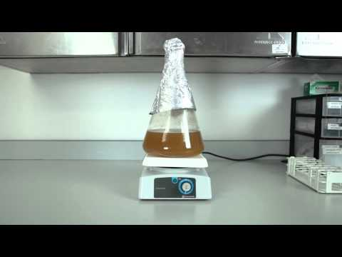 White Labs Inc: Yeast Starters