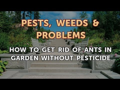 How to Get Rid of Ants in Garden Without Pesticide