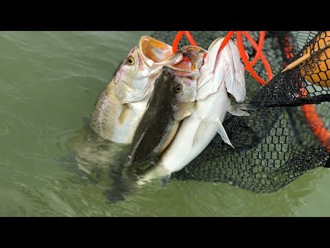 A Guide On How To Catch Specs and Redfish While Wade Fishing With Actual Video Proof!!!