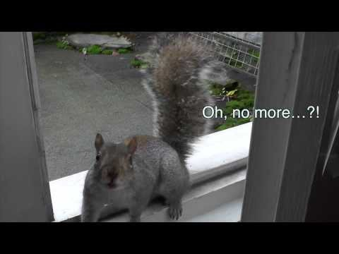 Cute squirrel eating his nuts shows amazing jump at the end!