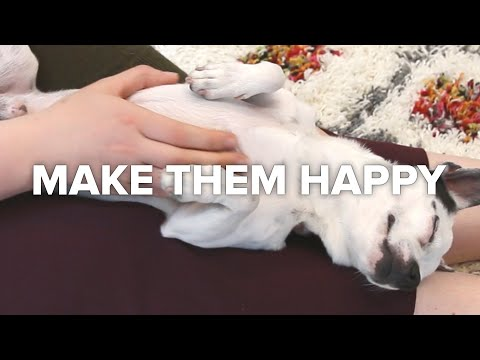Crafts For People Who Love Making Animals Happy