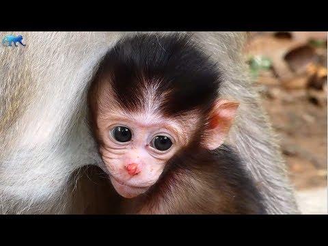 Newborn Baby monkey Alex nose still not better, Alex super active baby monkey