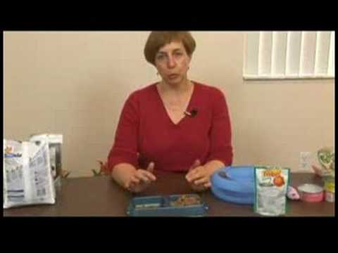 How to Care for Cats : Cat Care Tips: Weight Management