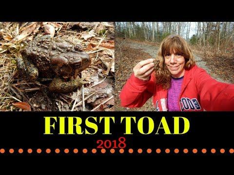 First Toad 2018 ~ Goat Hill Lock Uxbridge Mass.