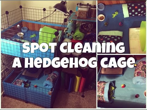 Spot Cleaning a Hedgehog Cage (2014)