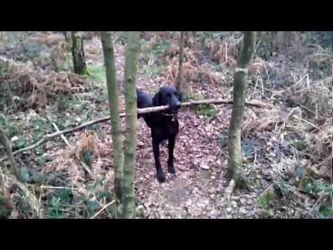 Clever dog Nanook, a sticky situation unstuck.
