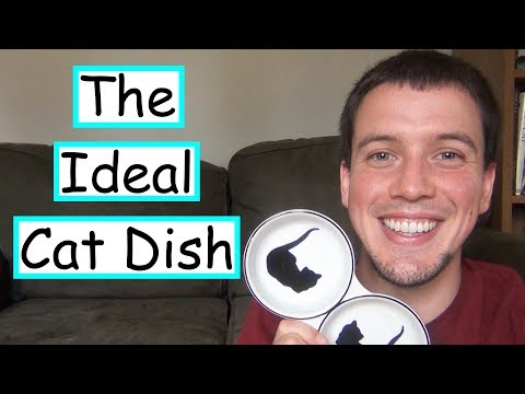 Choosing A Food Dish Your Cat Won't Hate