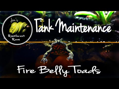 Fire Belly Toad Care & Maintenance