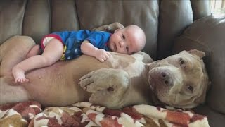 Dad Defends Letting His 1-Year-Old Son Nap and Cuddle With Huge Pit Bull