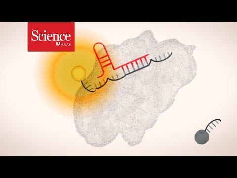 Science explains: CRISPR diagnostics