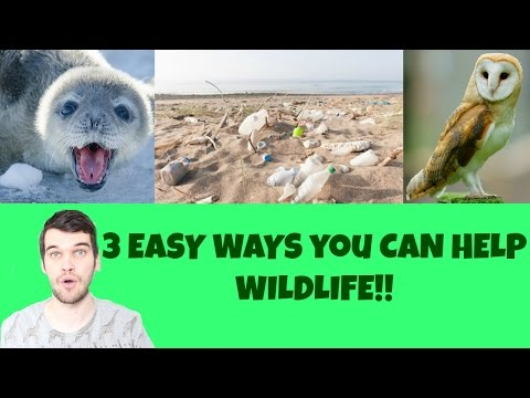 3 EASY WAYS YOU CAN HELP WILDLIFE!!