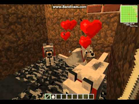 How to Tame and Use A Wolf in Minecraft