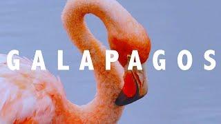 GALAPAGOS | LIKE NOWHERE ELSE ON EARTH