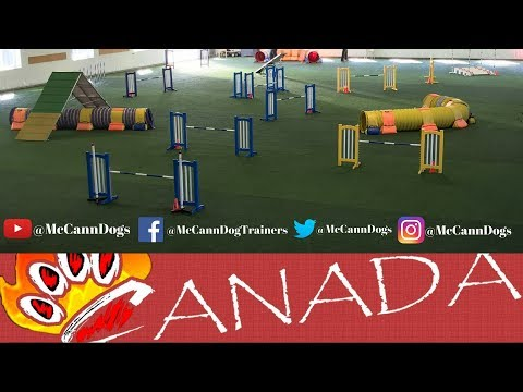 Dog Agility 2018 TRYOUTS FOR EO/AWC CKC AGILITY TEAM CANADA