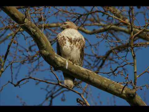 Invoking the Hawk's Spirit