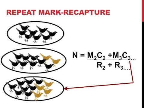 Mark recapture population estimation