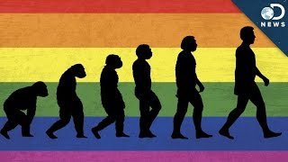 Why Is There Homosexuality?