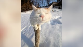 ANIMALS in WINTER - Best selection!