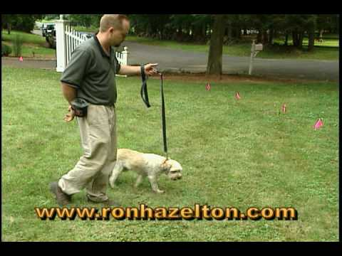 How to Install an Invisible Dog Fence