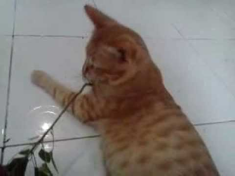 My cat eating weed