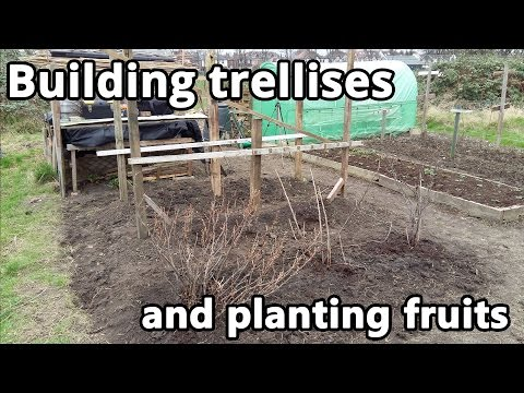Building trellises and planting fruits