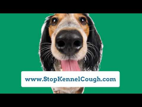 Kennel Cough Treatment|Treatment for Kennel Cough|How to Treat Kennel Cough