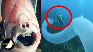 5 Mysterious Deep Sea Creatures Caught On Camera!
