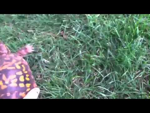 What Is My Turtle's Gender?