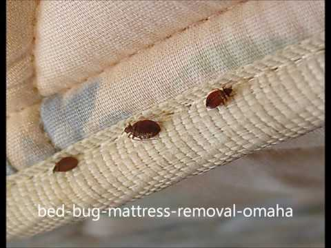 Bed Bug Infested Furniture Mattress Sofa Couch Removal in Omaha  | Excel Hauling Moving 402 810 6319
